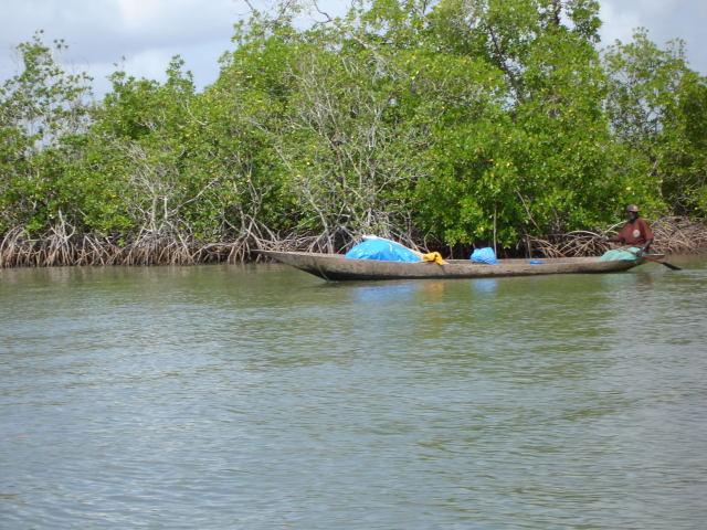 mangrove-2.1196675736.jpg