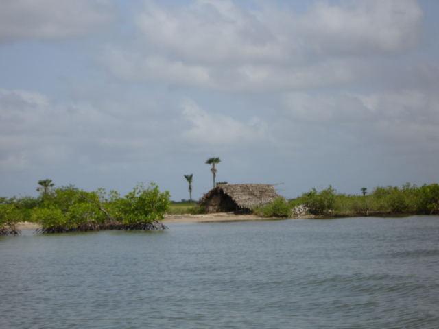 mangrove-3.1196675756.jpg