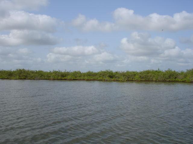 mangrove.1196675711.jpg