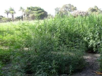 plantations-de-h-quelque-part-400.1204208425.jpg
