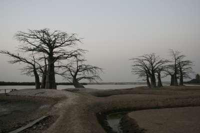 baobabs-bandial-400.1207495656.jpg