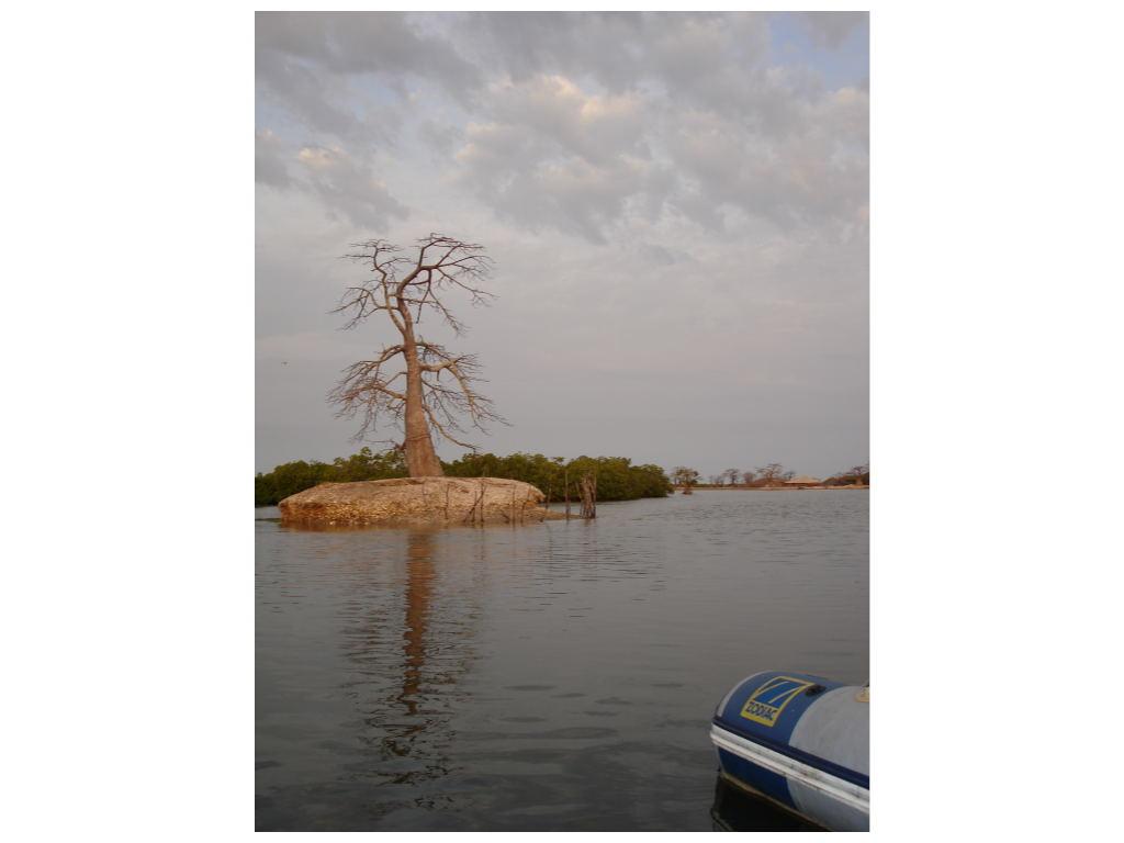 baobab-bandial.1217257464.jpg