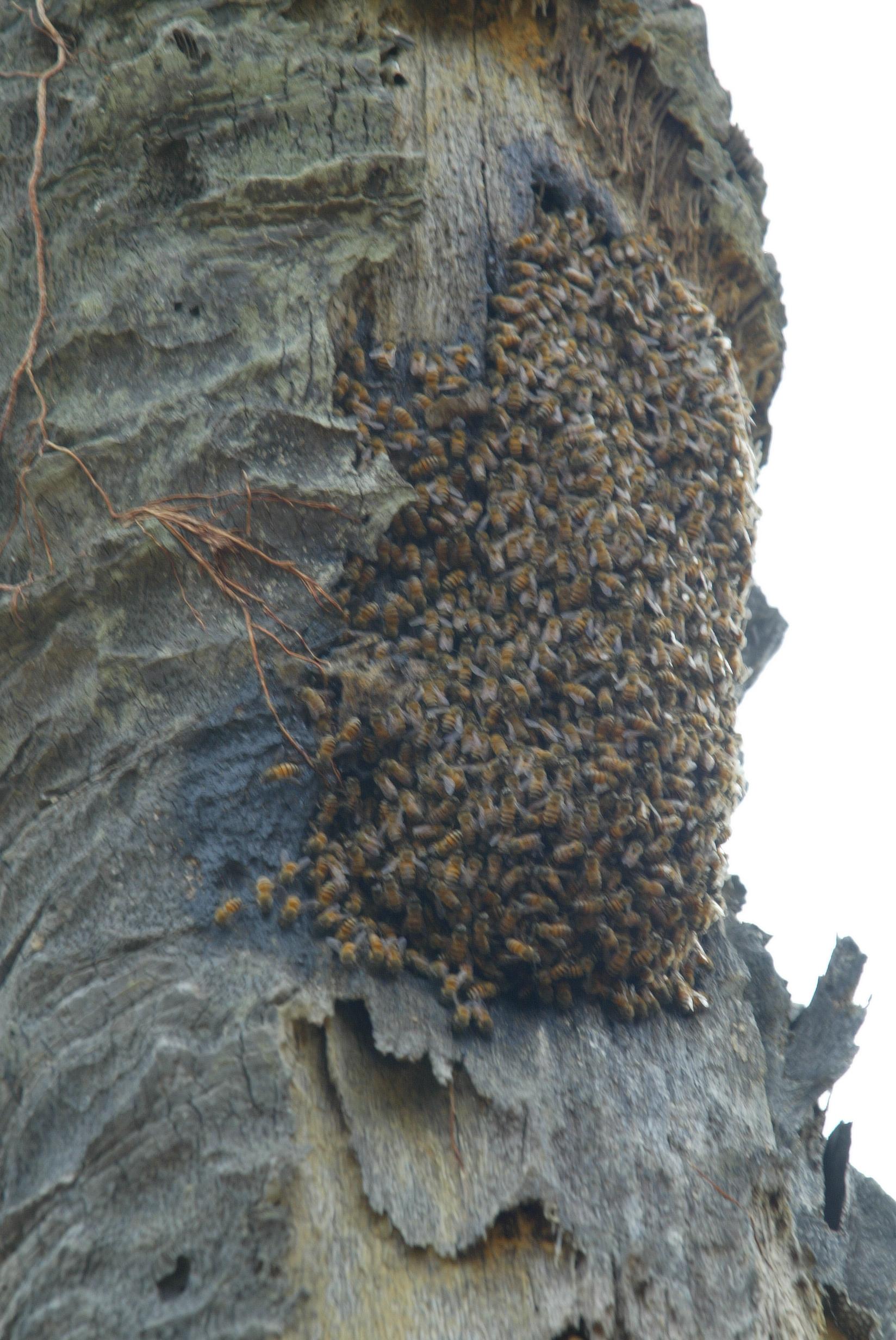 abeilles.1236065092.JPG